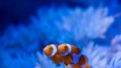 Beautiful, Fish, Natural, Wallpaper, Yellow