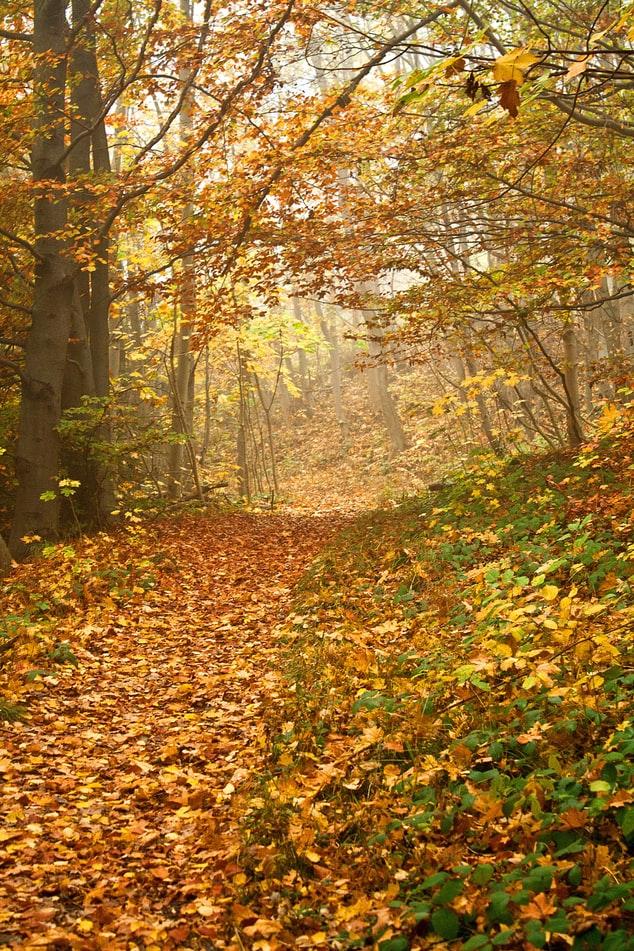 Natural Scene Background