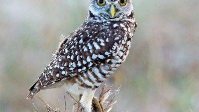 Beautiful, Bird, Colorful, Natural, Owl, Wallpaper