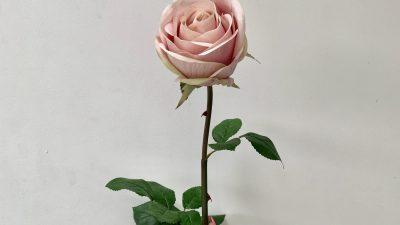 Beautiful, Flower, Natural, Pink, Wallpaper
