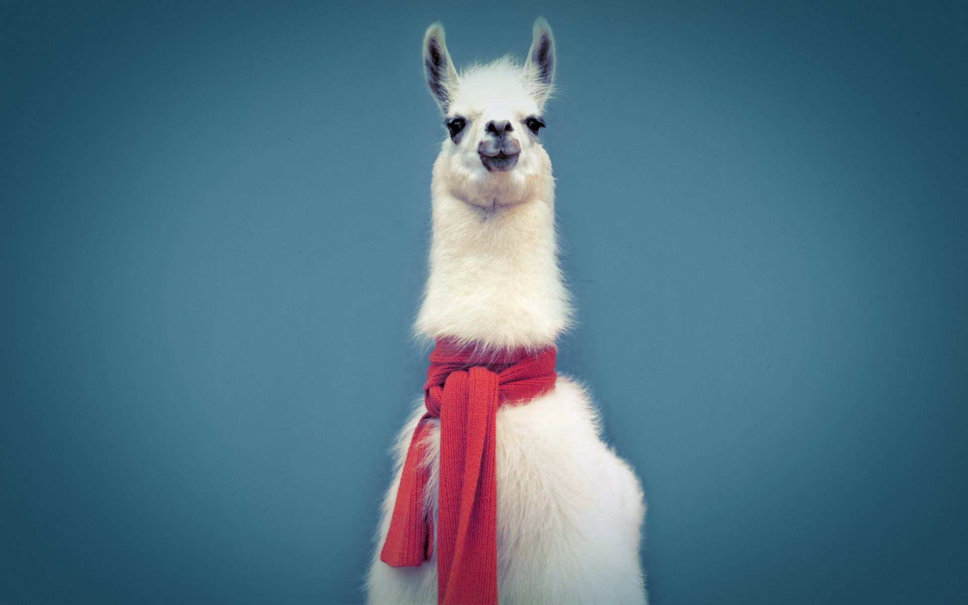 Llama Backgrounds