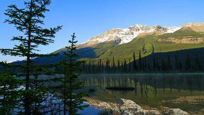 Green, Jasper, Mountain, National, Park, Tree, Wallpaper