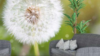 Dangelion, Flower, Natural, White, Widescreen