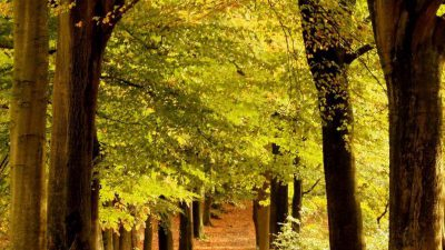 Best, Green, Natural, Tree, Wallpaper