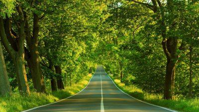 Beautiful, Gree, Image, Natural, Road, Scene, Tree