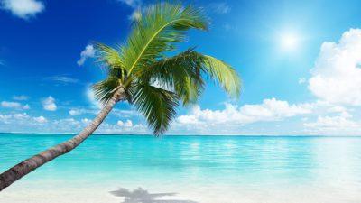 Clouds, Image, Palm, Sea, Tree, White, Wonderful