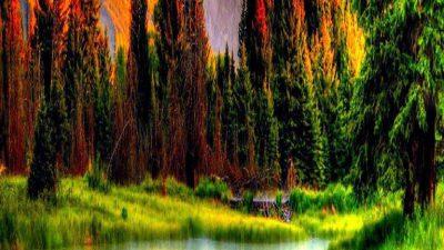 Green, Natural, Tree, Wallpaper, Widescreen