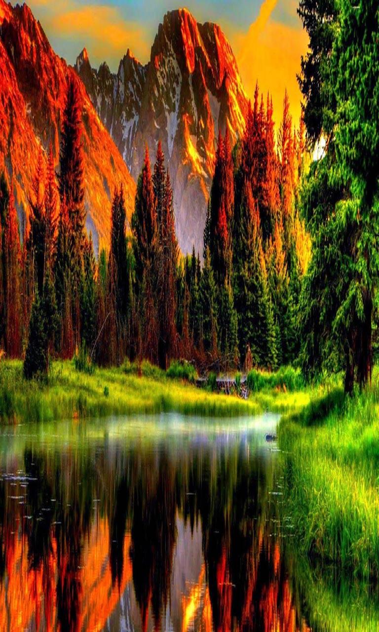 Beautiful Scene Picture