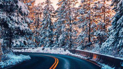 Beautiful, Desktop, Natural, Snowfall, Tree, Wallpaper