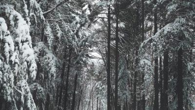 Image, Natural, On, Snowfall, Tree, Widescreen