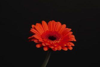 Background, Black, Cool, Flower, Red