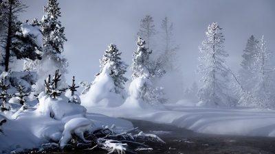 Beautiful, Best, Image, Natural, Snowfall, Tree