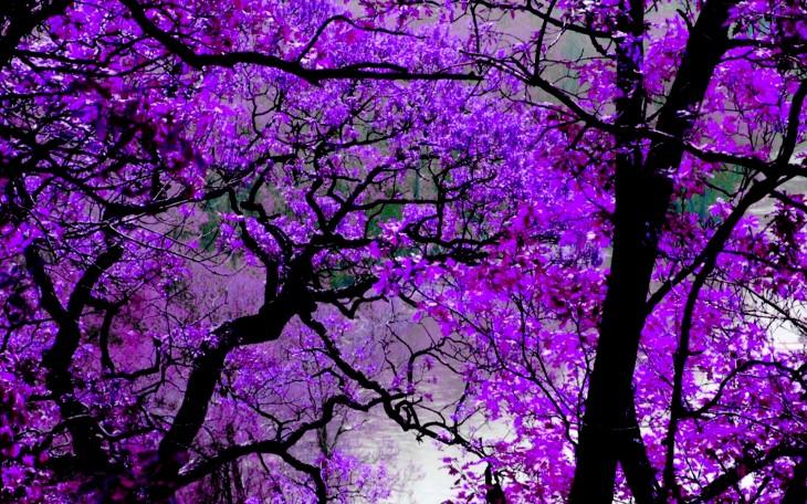 Purple Desktop Image