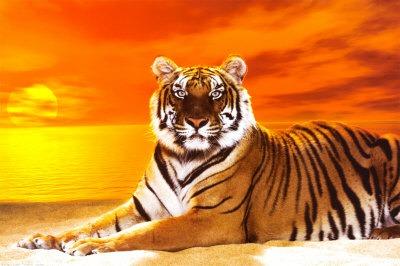 Bengal Tiger Backgrounds