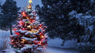 Beautiful, Christmas, Image, Snowfall, Tree