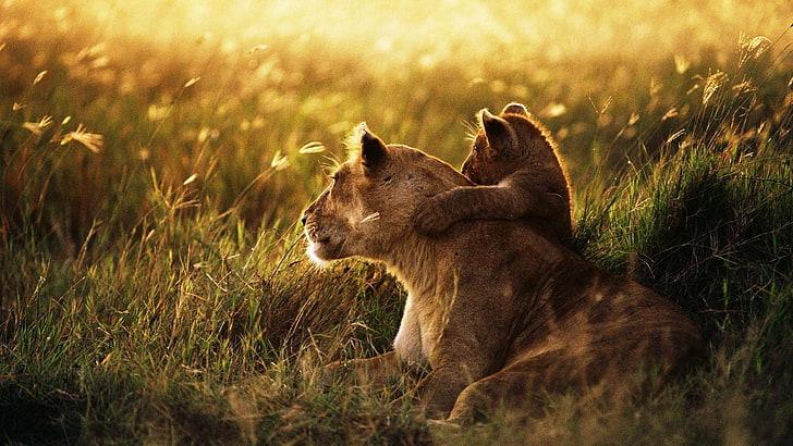 Baby Lion Image