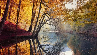 Image, Natural, Tree, Widescreen, Yellow