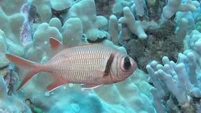 Animal, Fish, Image, Natural, Widescreen