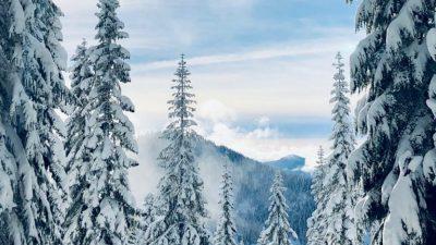Beautiful, Image, Natural, Season, Tree, Winter