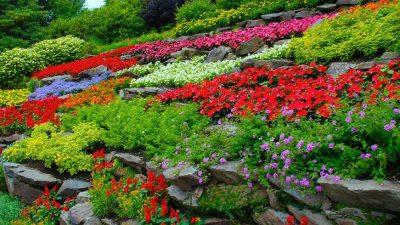 Colorful, Flower, Garden, Image, Natural