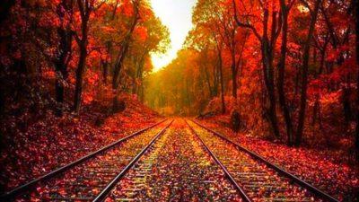 Autumn, Image, Leaves, Natural, Sunrise
