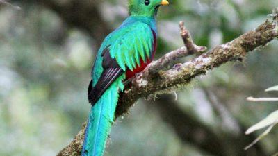 Beautiful, Bird, Colorful, Image, Quetzal