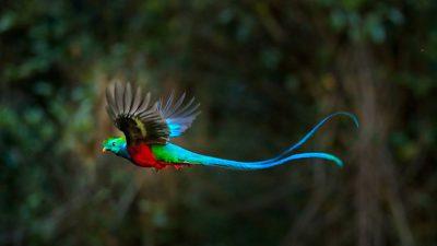 Awesome, Bird, Natural, Nice, Wallpaper