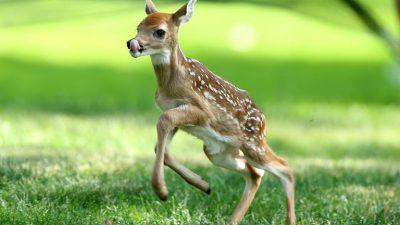 Animal, Baby, Background, Deer, Green, Natural