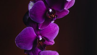 Amazing, Flower, Image, Natural, Purple