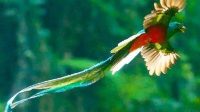 Beautiful, Bird, Green, Natural, Wallpaper