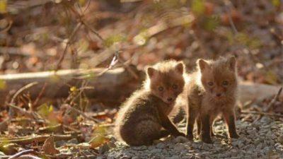 Baby, Brown, Fox, Image, Natural, Nice, So