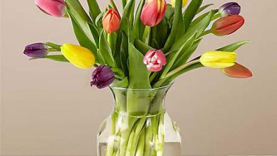 Amazing, Background, Flower, Natural