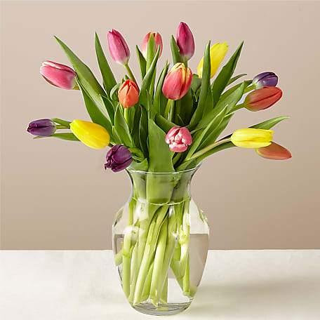 Tulip Flower Image