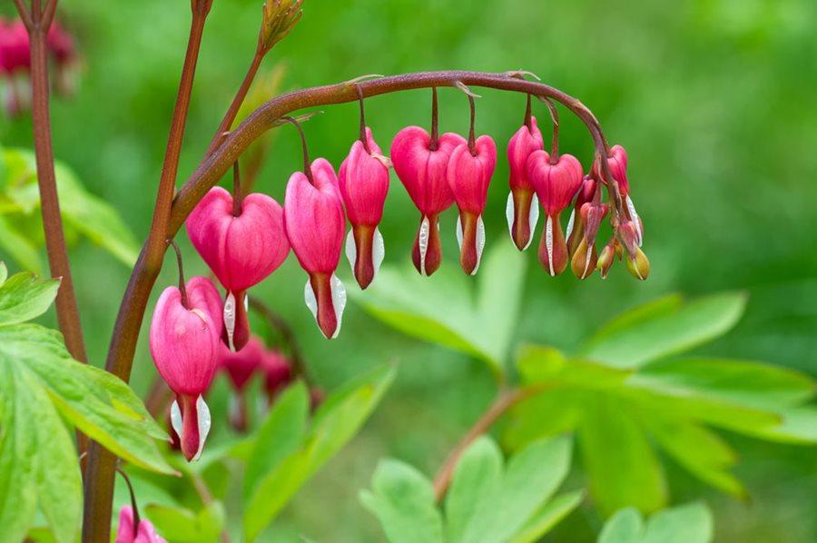Heart Flower Photo