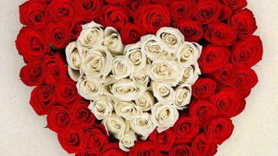 Animated, Heart, Love, Rose, Wallpaper