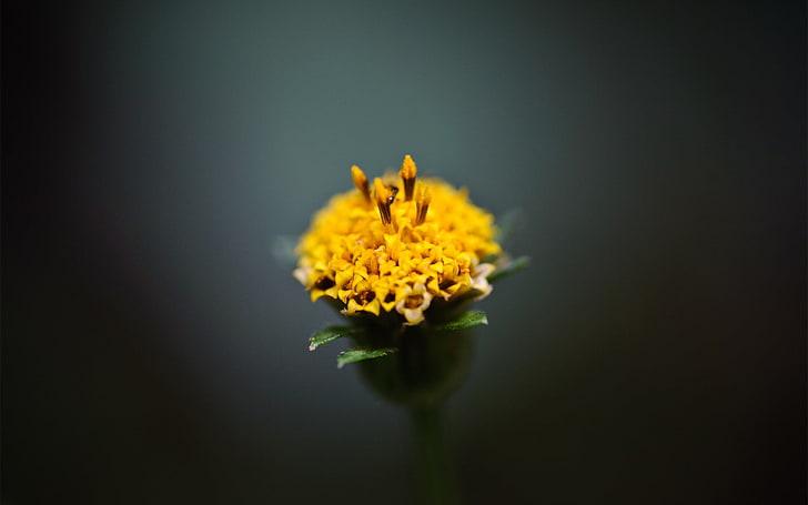 Сalendula Marigold Image