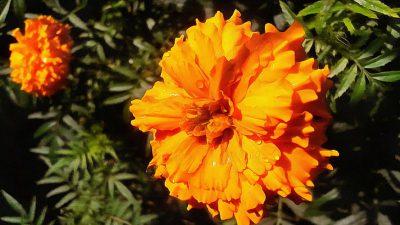 Background, Desktop, Flower, Nature, Wonderful