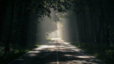 Fog, Natural, Night, Tree, Wallpaper