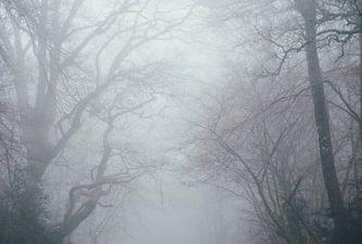 Best, Fog, Natural, Wallpaper, Widescreen
