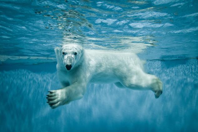 White Bear Backgrounds