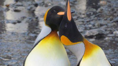 Animal, Image, Natural, Nice, Penguin, Super