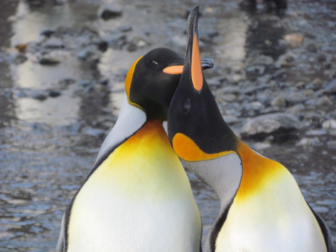 Penguin Picture