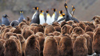 Backgrounds, Free, Natural, Penguin