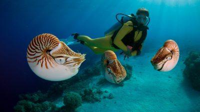Image, Natural, Nice, Palau, So, World