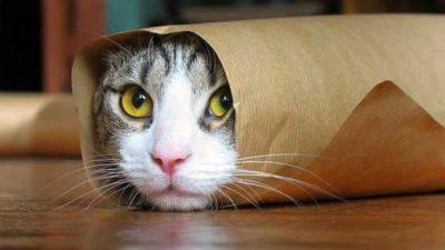 Beautiful, Cat, Eyes, Green, Image