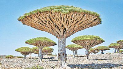 Image, Nature, Tree, Unusual, Widescreen