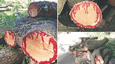 Best, Image, Natural, Tree, Unusual