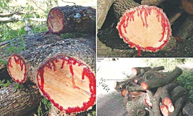 Unusual Tree Image