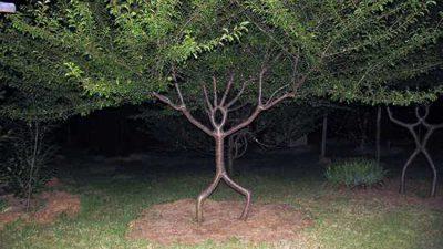 Beautiful, Green, Image, Tree, Unusual