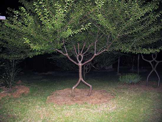 Unusual Tree Picture